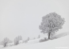 The tree (Astrid Photography.) Tags: trees winter mountain snow france tree nature frost ngc savoie coth lestroisvallees anawesomeshot astridphotography stmartindebelleville coth5 coth5