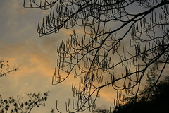 New flowers in sunset (prasanth_p_jose) Tags: campus iit mandi lowerhimalayas beautifulpictures beautifulcampus kamand shivalikranges kamandcampus iitmandikamandcampus amazingcampuspictures wildlifeiitmandikamandcampus