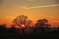 Black & Orange (Elbmaedchen) Tags: sonnenuntergang bäume silhouette abendhimmel goldenestunde