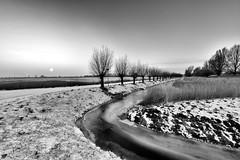 The lure of Dutch light (PWD_8348) (Pieter Berkhout) Tags: knotwilgen sloot ondergaandezon vergezicht panorama perspectief hollandslandschap sneeuwlandschap sneeuw besneeuwd zwartwit willows ditch sunset vista perspective snowylandscape snow snowy landscapepieter berkhout guiltypleasure dutchlandscape dutch slootje