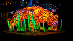 Animal Kingdom - Tiger in the Grass (Jeff Krause Photography) Tags: ap animal colored disney floating floats fountain jets kingdom lake light park preview projections rivers show wdw water theme kissimmee florida unitedstates us