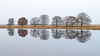 Glassy (Pieter ( PPoot )) Tags: kloosterveld npdwingelderveld spiegelglad glassy reflection trees 169