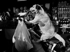 Shopping at the market. (Neta Gov) Tags: dog shopping carmelmarket aviv market telaviv
