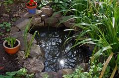 1383-35L (Lozarithm) Tags: calne oldforge gardens ponds refelections k50 pentax zoom 28105 hdpdfa28105mmf3556eddcwr
