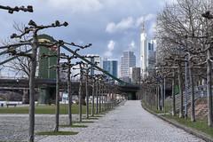2017 menschenleeres Mainufer an der Weseler Werft (mercatormovens) Tags: frankfurt main city sykline weselerwerft platanenallee