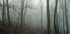 Rudston mists, Yorkshire. (EmPhoto.) Tags: emmiejgee landscapepassion misty woodland winter landscape forest rudston eastyorkshire uk sonya7r sonyzeiss2470mm panorama