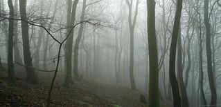 Rudston mists, Yorkshire.