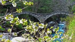 Ponte dei Salti - Lavertezzo - Ticino - Svizzera (Felina Photography - in Ticino:-)) Tags: lavertezzo verzasca ticino tessin pontedeisalti