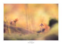 Fantasyland (Naska Photographie) Tags: naska photographie photo photographe paysage proxy proxyphoto landscape imaginaire imaginarium extfor mushroom champignon nature color couleur bokeh macro macrophotographie macrophoto