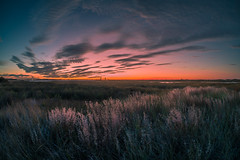 Longing 盼望 (kaising_fung) Tags: waterfront sky clouds pink painted tideland grassland sea grass