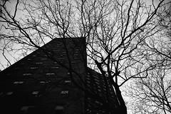 what happens to you here is forever. (jdx.) Tags: blancoynegro flickr noiretblanc newyorkcity newyork nyc blackandwhite pretoebranco schwarzundweiss schwarzweiss fotografia outdoor landscape cityscape 1984 georgeorwell orwell bigbrother nature monochrome monochromatic fujixseries fujixt2 fujixshooters fujifilm tree trees quote quotes book books architecture jdx moody grain grainy nineteeneightyfour