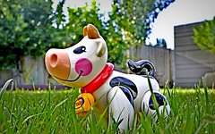 Smiley moo (flowrwolf) Tags: smileonsubdaysmilingobjects smileonsunday smilingobject 41underfor117in2017 117in2017 117picturesin2017 underfor117in2017 under underfoot green grass greengrass turf tolotoy tolofarmtoy blackandwhitetoycow artificialobject smilingtoycow plastictoy toy inmyyard inmygarden sony sonya65 bwobject happycowtoy vivid bright outdoor outside oudoors flowrwolf smilingobjects