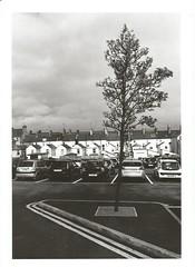 Tree Duff. (Photographer Dave C) Tags: 35mm exposure 35mmphotography photography photographerdave passion photograph photographer creative abstract trees stunning streetphotography mygearandme mymindseye bangor blackwhite