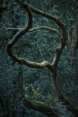 Verdant Knot (enricofossati) Tags: enricofossati fantasy forest romantic dark dramatic lush green