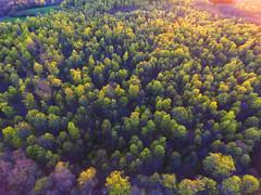 Spring from Above (Matt Champlin) Tags: tgif friday spring springtime drone aerial aerialphotography dronephotography drones dji djiphantom4 phantom4 djiphantom beautiful lush green growth new life ny 2017 happy peaceful