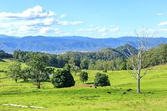 Peaceful (TonyinAus) Tags: newsouthwales australia mountains green peaceful