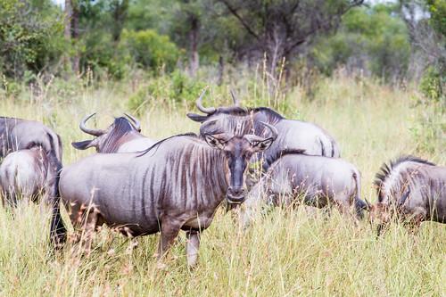 KrugerParkREIZ&HIGHRES-43