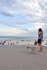 Dog & phone (jeremyhughes) Tags: australia bondi beach dog phone mobilephone cellphone seaside ocean promenade seafront beachfront outdoor lifestyle labradoodle sundress flipflops thongs sunshine sunny horizon clouds sky walk walking nikon people leisure d750 nikkor afszoomnikkor2470mmf28ged canine walkies