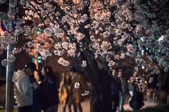 nightscape 밤풍경 (purunuri) Tags: nightshot landscape mungyung sight spring stroll springstroll korea tour cherryblossom 벚꽃 문경 풍경 밤