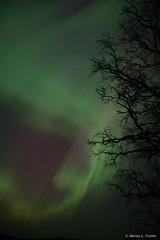 DSC_5356.jpg (marius.vochin) Tags: lights night sky stockholm longexposure outdoor amasing northenlights