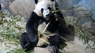 Bei Bei 2017-03-09 at 12.29 PM