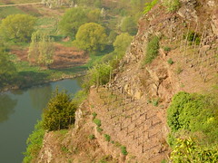 Mini-Weinterrasse (Jörg Paul Kaspari) Tags: eller diecalmonttour frühling spring april calmont calmontklettersteig wanderung wandertour weinberg steillage terrassenweinbau weinbau