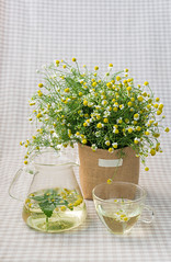Chamomile Tea (Picocoon图茧) Tags: herb tea chamomile flower abundant harvest spring health healthy pot cup glass afternoon green leisure peace home soft
