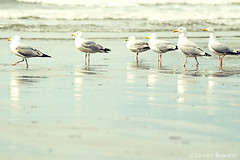 A Birds Eye View (laurenbywaterphotography) Tags: seagulls seaside borth birds animals landscape seascape jellyfish abstract aberystwyth