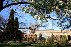 Lente in de Leuvense Kruidtuin (Kristel Van Loock) Tags: leuven louvain lovanio lovaina hortusbotanicuslovaniensis leveninleuven drieduizend seemyleuven visitleuven atleuven loveleuven kruidtuin kruidtuinleuven leuvensekruidtuin jardinbotanique jardinbotaniquedelouvain jardimbotanico jardinbotanico botanicalgarden botanischetuin botanischergarten ortobotanico lente spring lente2017 maart2017 march2017 springseason printemps primavera springisintheair lenteindekruidtuin botanischetuinvanleuven vlaanderen vlaamsbrabant visitflanders visitflemishbrabant visitvlaamsbrabant flandre fiandre flanders visitlouvain brabantflamand brabantefiammingo flemishbrabant belgium visitbelgium belgio belgique belgien belgica belgië toerismevlaanderen toerismevlaamsbrabant