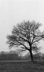 Old oak at the cold river (Rosenthal Photography) Tags: landschaft eiche 35mm olympusom2 flus bäume asa400 pflanzen baum ff135 winter offensen städte ilfordhp5 oste natur analog 20170301 dörfer siedlungen landscape nature tree oak fields river olympus om2 ilford hp5 hp5plus bw epson v800 spring backlandwhite