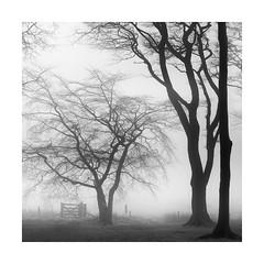 Wood n Gate (Nick green2012) Tags: woodland blackandwhite square minimal trees gate