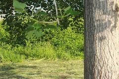 IMG_1016_1 (Pablo Alvarez Corredera) Tags: vega barros langreo huerta huerto arboles arbol chopo chopal chopero chopera desenfoque practica rural mundo rustico