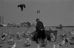Coney Island Beach - New York (dom mesquita) Tags: olympus olympusom1 zuikolens zuiko50mm 35mm 135mm film filmphotography fotografiafilme analog analogphotography analogico fotografiaanalógica ilford ilfordfilm ilfordpan streetphotography people coneyisland newyork nyc brooklyn