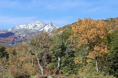 Nevado de Chillán (Mono Andes) Tags: andes chile chilecentral regióndelbiobío nevadodechillán otoño pellines