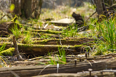 Der mystische See (Oli_21) Tags: blume flower wald forest see lake moor wandern hiking abenteuer adventure nikon sigma d5100 wunderland wonderland macro makro bokeh blüte blossom petal frühling spring mystic mystisch natur nature steg mecklenburg norden norddeutschland