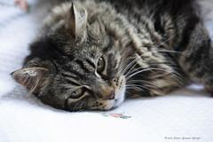 _MG_6351 Molly (Dante Guazzo Giorgio) Tags: 2014 cumiana felini