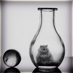 Ein Glas saure Katze (Daborius B.) Tags: glass pet animal fun macro grumpy cat
