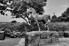 A statue of a Welsh Cob (Mabjack) Tags: mabjack statue metal welshcob cobyncymreig horse cob animal ridinghorse aberaeron bw mono blackandwhite wales ceredigion