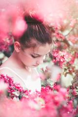 (Rebecca812) Tags: girl child spring beauty bun romantic regency innocent crabappleblossoms fresh portrait lookingdown tween childhood floral flower petal soft canon rebecca812