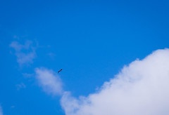 Up Above away from your BULLSHIT you so called Humans 🐦 Flying Bird Low Angle View Blue Sky Midair Nature Shades Of Blue MnMl Mnmlsm Minimalism Minimal Minimalistic Minimalmood Minimalist Minimalobsession Minimalart Minimalarchy Birdphoto One Bird In (Achwaq Khalid) Tags: upabove humans flying bird lowangleview blue sky midair nature shadesofblue mnml mnmlsm minimalism minimal minimalistic minimalmood minimalist minimalobsession minimalart minimalarchy birdphoto onebird inharmonywithnature onestepbeyond mobilephotography