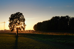 Drawing with the light (davcare) Tags: country campagna verona sunset tramonto adige fiume river tree albero light luce