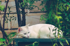 This Is My Jungle (francoislinde) Tags: backyard muted hipster cute box white sleeping home afternoon southafrica gauteng film animal light centurion 2017 mellow outside pet happy cat laying feline relaxed garden tree content april matte jungle leaves