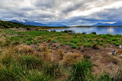 USH.3 (G.Paskudzki) Tags: penguin ushuaia patagonia argentina travel see water clouds mountains