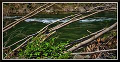 AmericanRiver_0422d (bjarne.winkler) Tags: american river middle fork near forrest hill ca