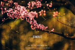 [day-116] (mohiuddin shaik(moin)) Tags: spring bloom garden fantasy fotobyms