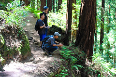 (kathyparmisano) Tags: california nature hiking muirwoods hikers