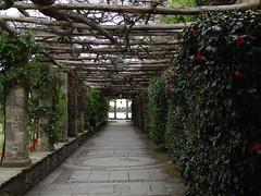 Pergola - Hever Castle & Gardens - Edenbridge {mei 2013} (westher) Tags: kent mei tuin lente edenbridge southeastengland 2013 hevercastlegardens 1001gardens