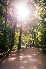 about nature in cities (Tafelzwerk) Tags: trees summer sun nature munich mnchen spring sommer centre natur center englischergarten sonne wald bume garten englishgarden frhling gegenlicht
