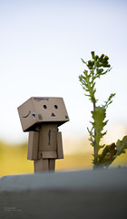 Huge flower (Inelund) Tags: plant flower cute love nature dof expression danbo canoneos5dmarkii danbolove