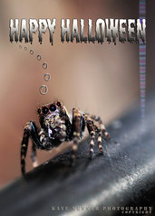 HAPPY HALLOWEEN for the Spider Lovers (Kaye Menner) Tags: red hairy sunlight white black texture halloween insect photography grey spider scary rainbow eyes legs arachnid spiderweb ugly greetings fangs greetingcard happyhalloween blackeyes horrific araneae hairyspider chelicerae anthropod halloweengreetings orderaraneae redandblackspider halloweengreetingcard rainbowspiderweb kayem